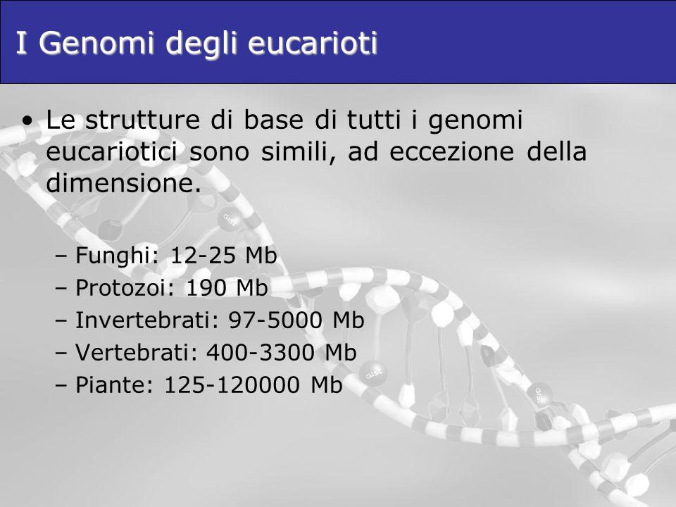 I Genomi degli eucarioti