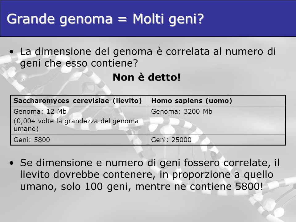 Grande genoma = Molti geni