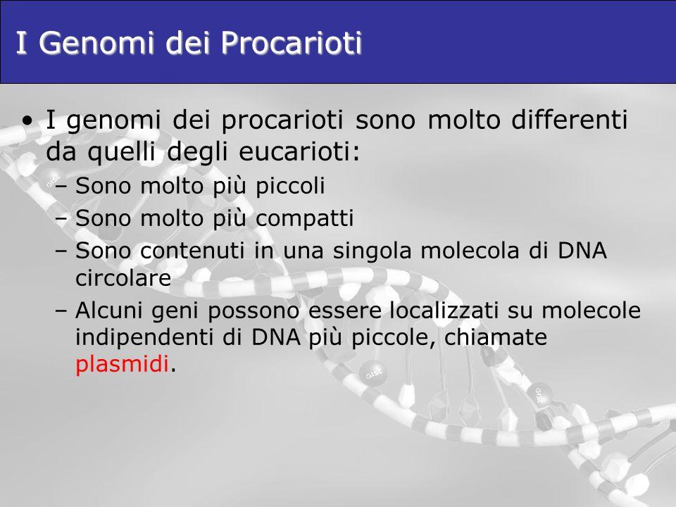 I Genomi dei Procarioti