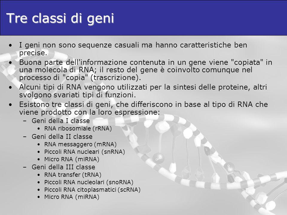 Tre classi di geni I geni non sono sequenze casuali ma hanno caratteristiche ben precise.