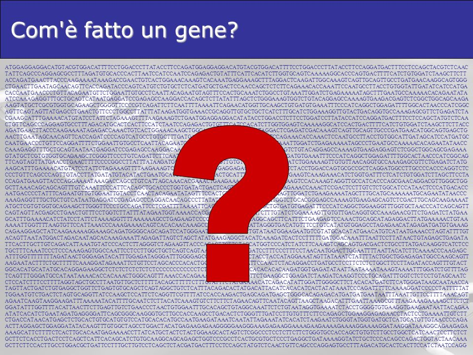 Com è fatto un gene