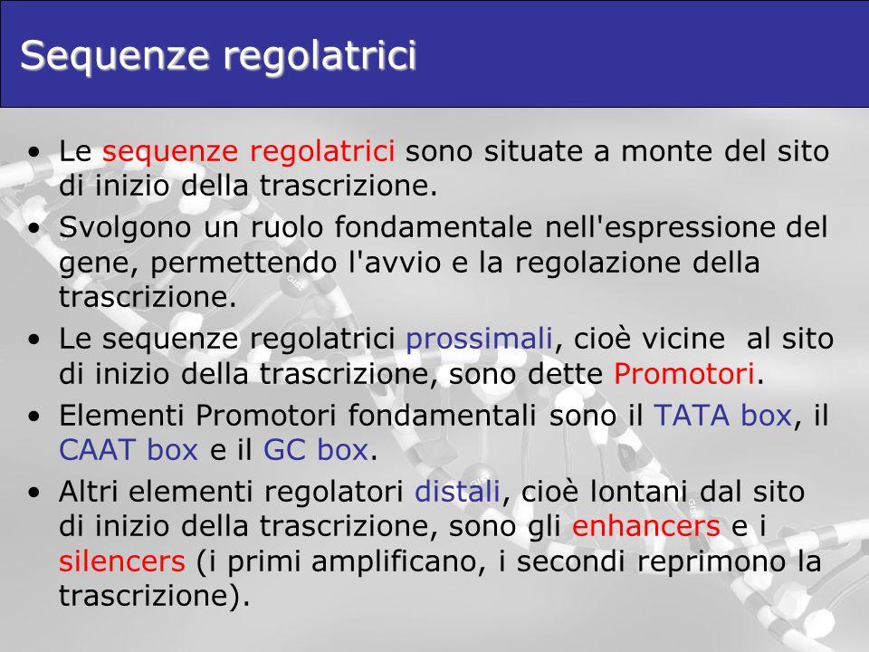 Sequenze regolatrici Le sequenze regolatrici sono situate a monte del sito di inizio della trascrizione.