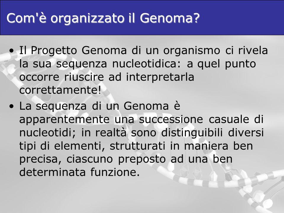 Com è organizzato il Genoma