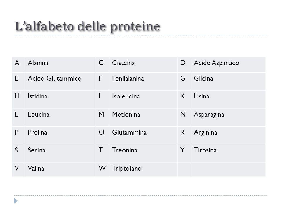 L'alfabeto delle proteine