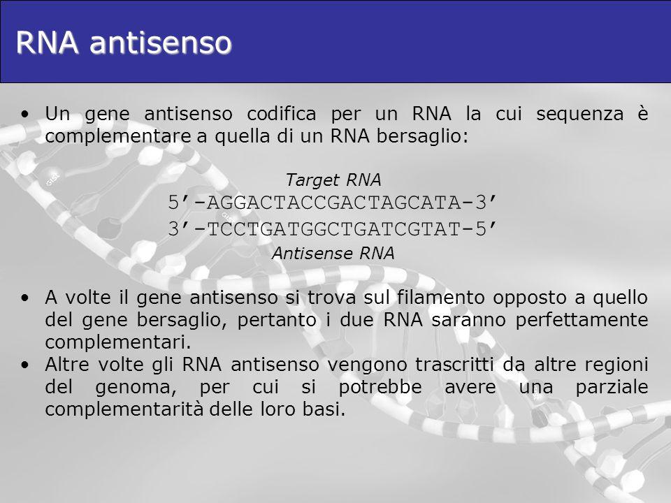 RNA antisenso 5'-AGGACTACCGACTAGCATA-3' 3'-TCCTGATGGCTGATCGTAT-5'