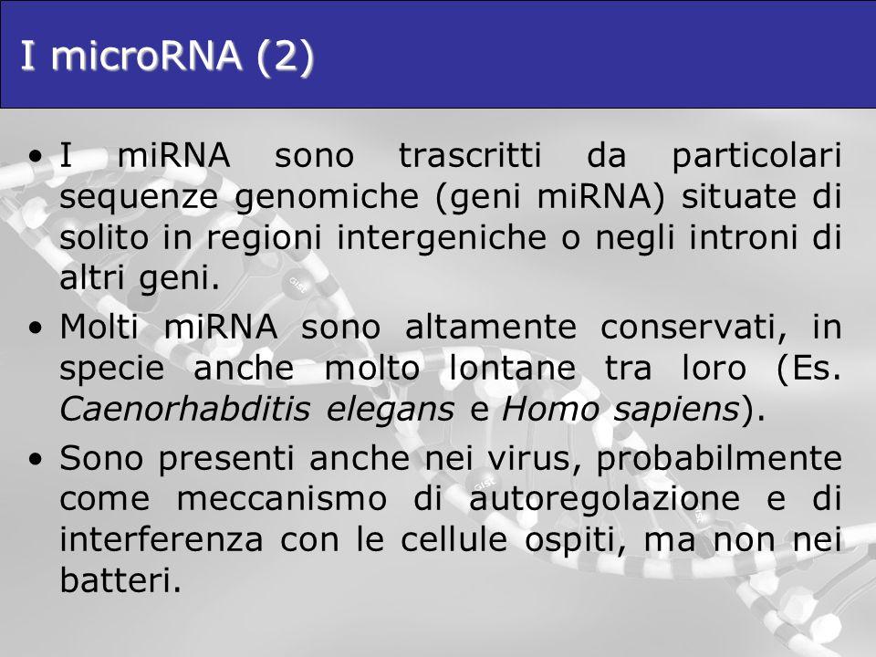 I microRNA (2)