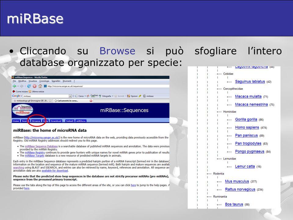 miRBase Cliccando su Browse si può sfogliare l'intero database organizzato per specie: