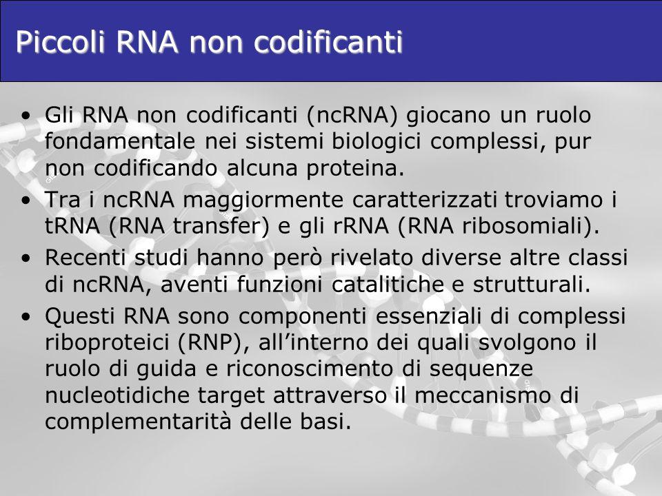 Piccoli RNA non codificanti