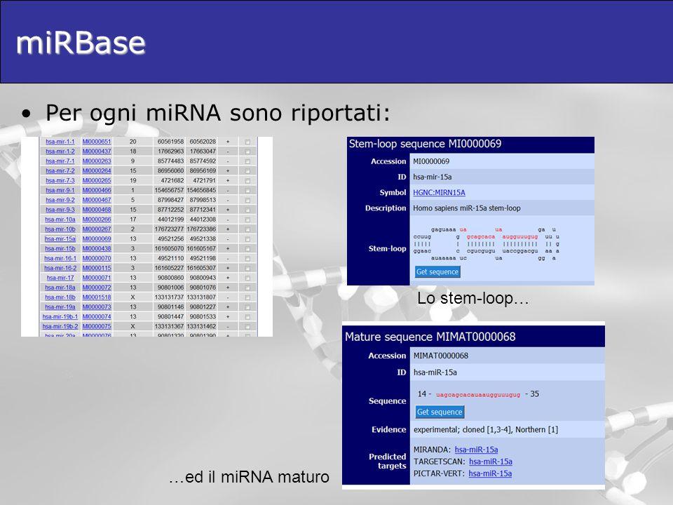 miRBase Per ogni miRNA sono riportati: Lo stem-loop…