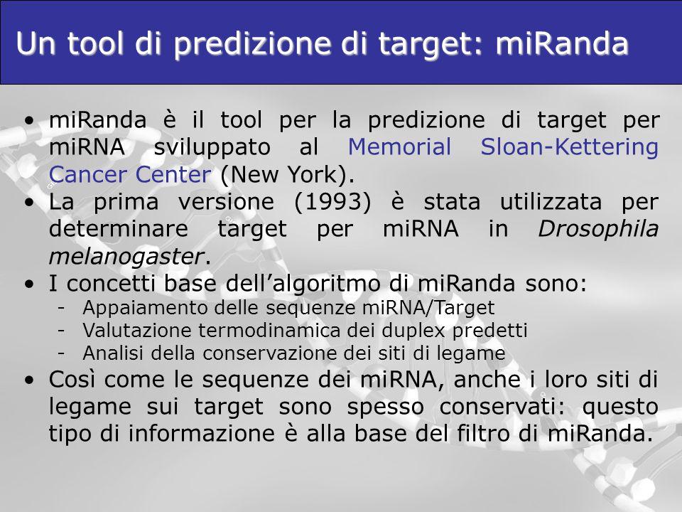 Un tool di predizione di target: miRanda