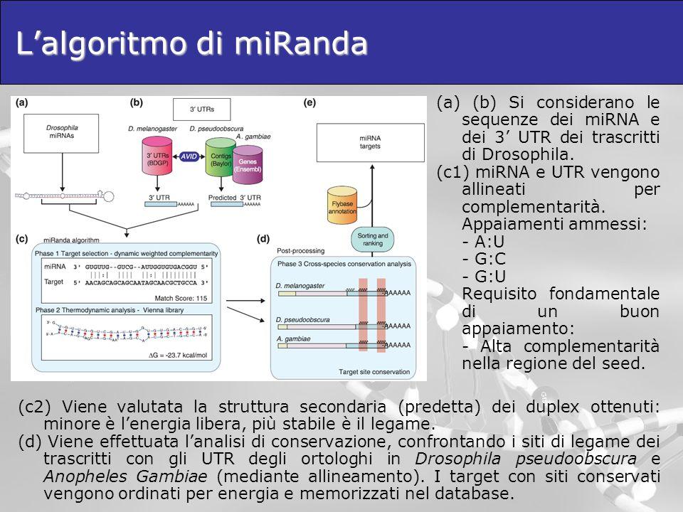 L'algoritmo di miRanda