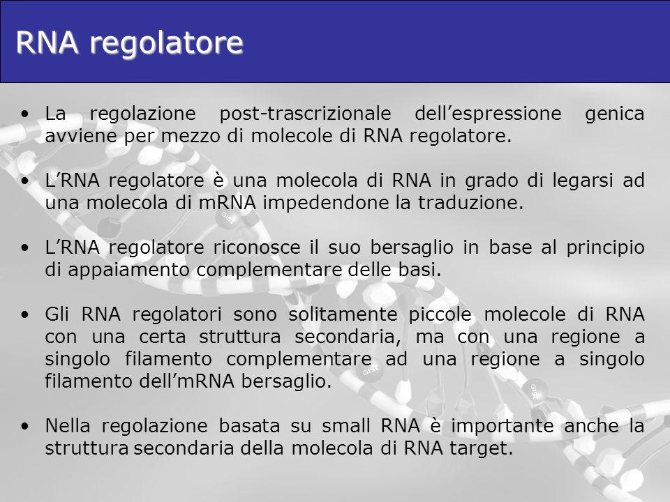 RNA regolatore La regolazione post-trascrizionale dell'espressione genica avviene per mezzo di molecole di RNA regolatore.