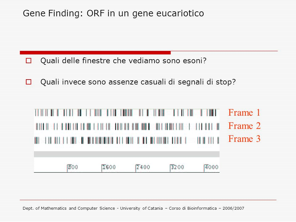 Frame 1 Frame 2 Frame 3 Gene Finding: ORF in un gene eucariotico