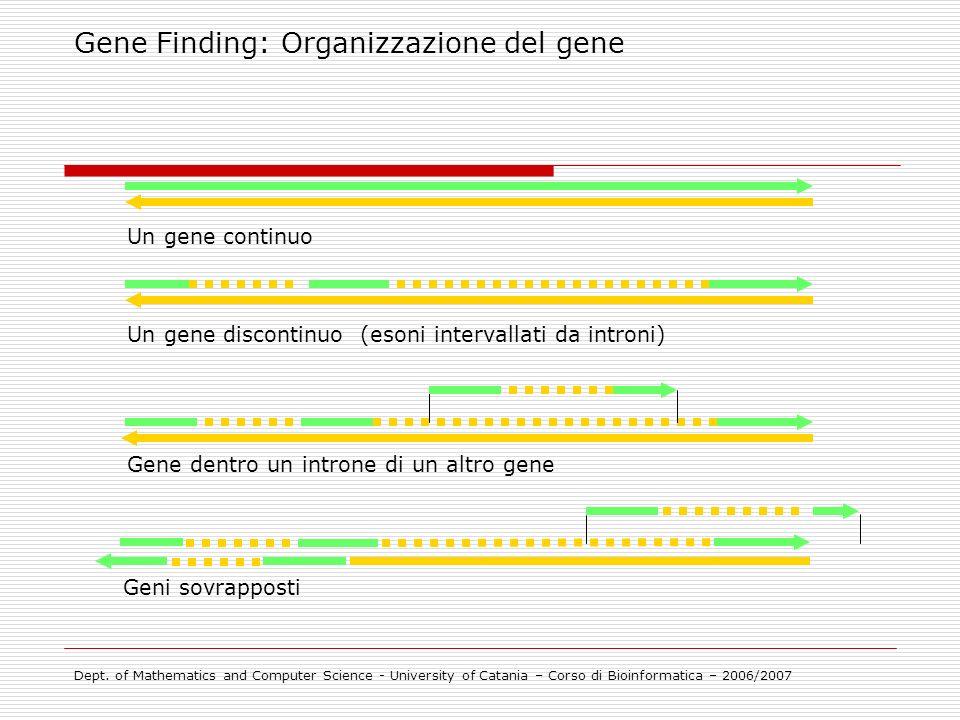 Gene Finding: Organizzazione del gene