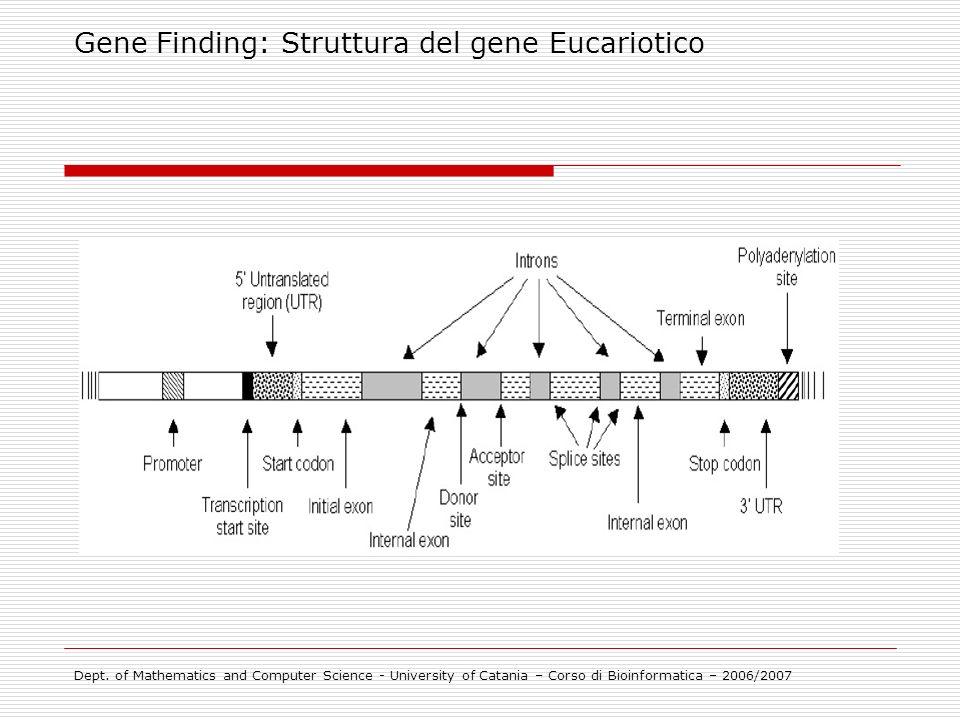 Gene Finding: Struttura del gene Eucariotico