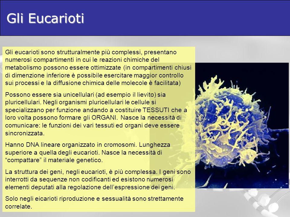 Gli Eucarioti