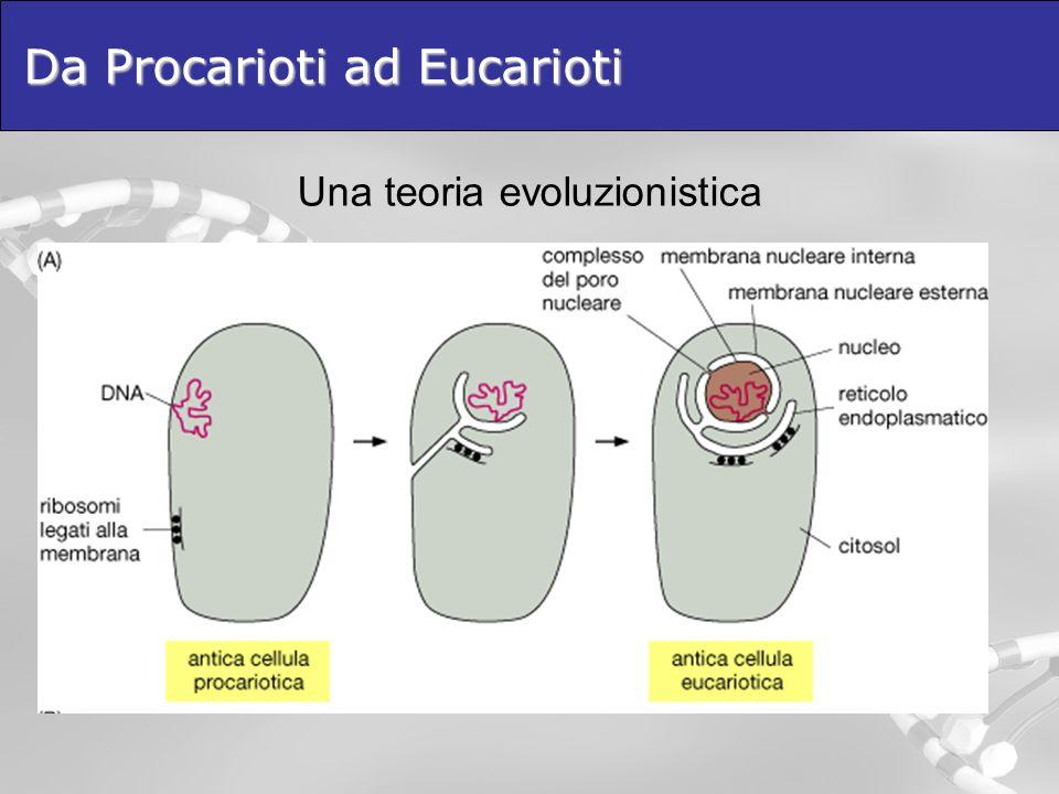 Da Procarioti ad Eucarioti