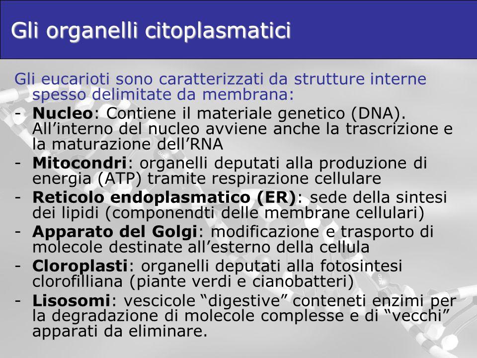 Gli organelli citoplasmatici
