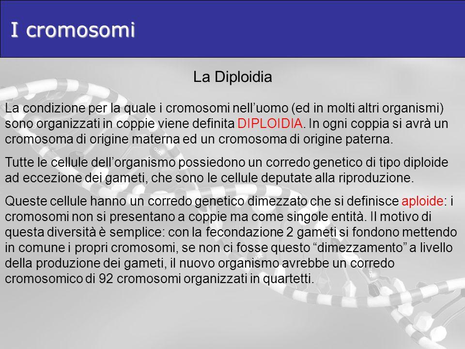 I cromosomi La Diploidia
