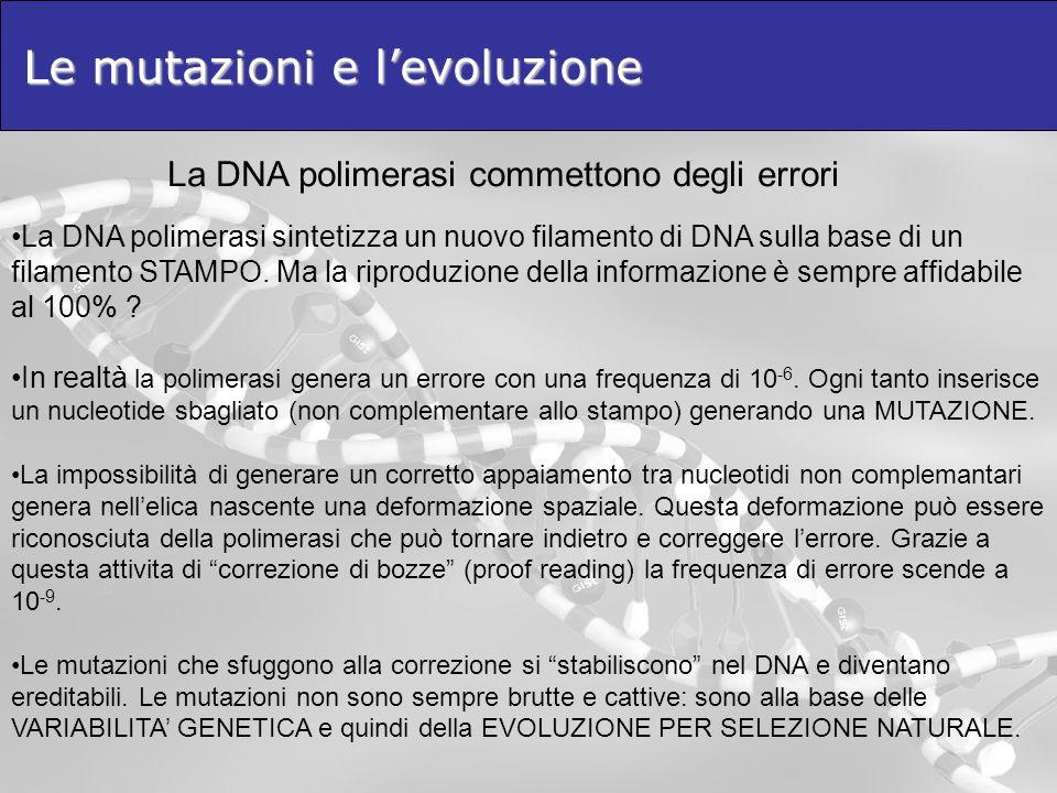 Le mutazioni e l'evoluzione