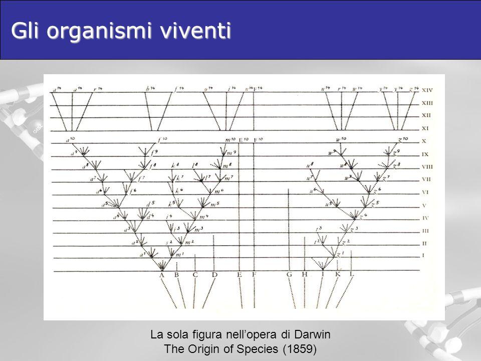 Gli organismi viventi La sola figura nell'opera di Darwin