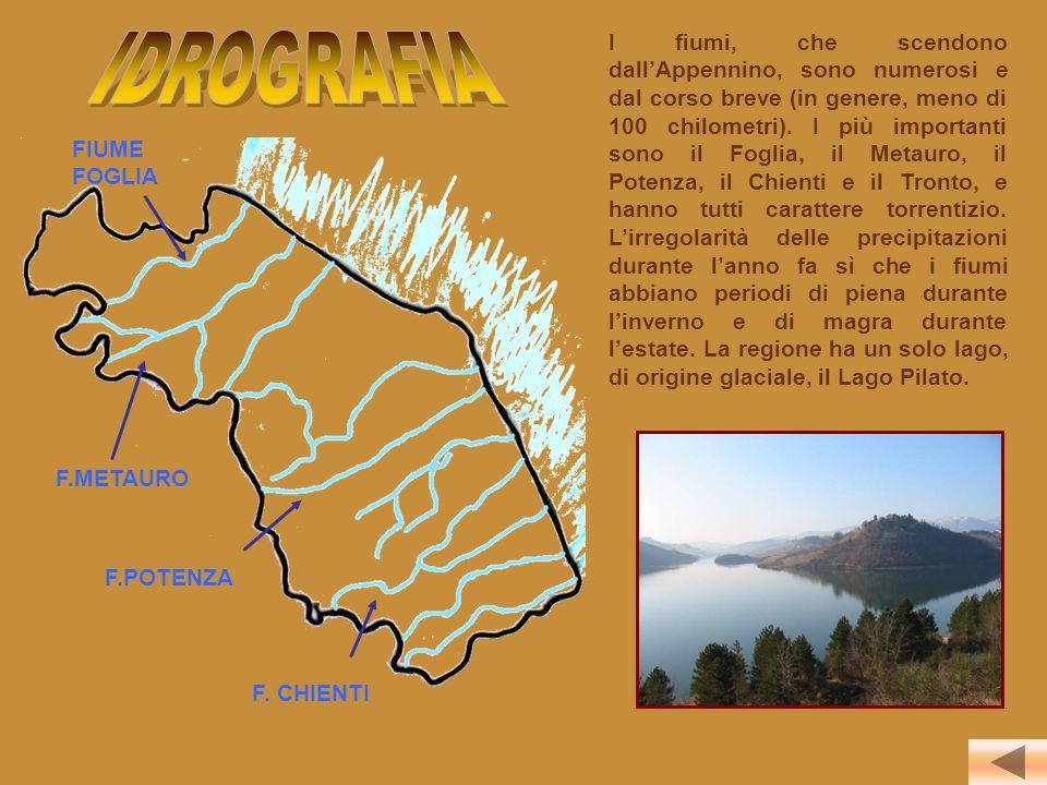 I fiumi, che scendono dall'Appennino, sono numerosi e dal corso breve (in genere, meno di 100 chilometri). I più importanti sono il Foglia, il Metauro, il Potenza, il Chienti e il Tronto, e hanno tutti carattere torrentizio. L'irregolarità delle precipitazioni durante l'anno fa sì che i fiumi abbiano periodi di piena durante l'inverno e di magra durante l'estate. La regione ha un solo lago, di origine glaciale, il Lago Pilato.