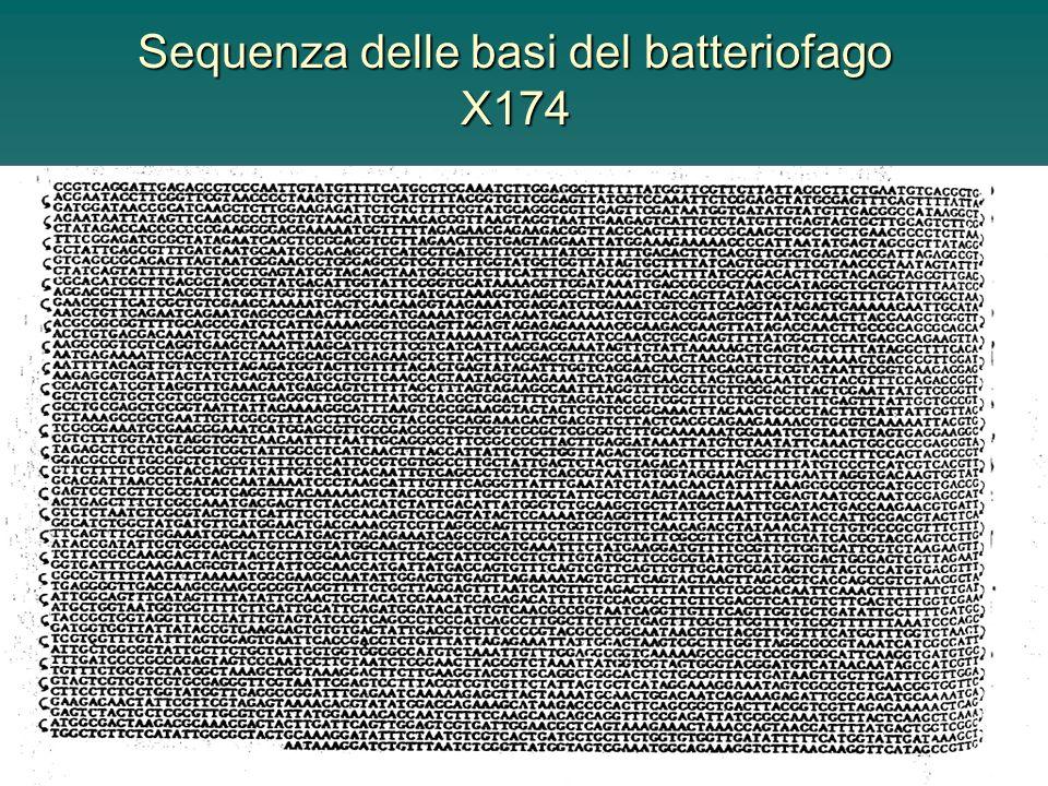 Sequenza delle basi del batteriofago X174