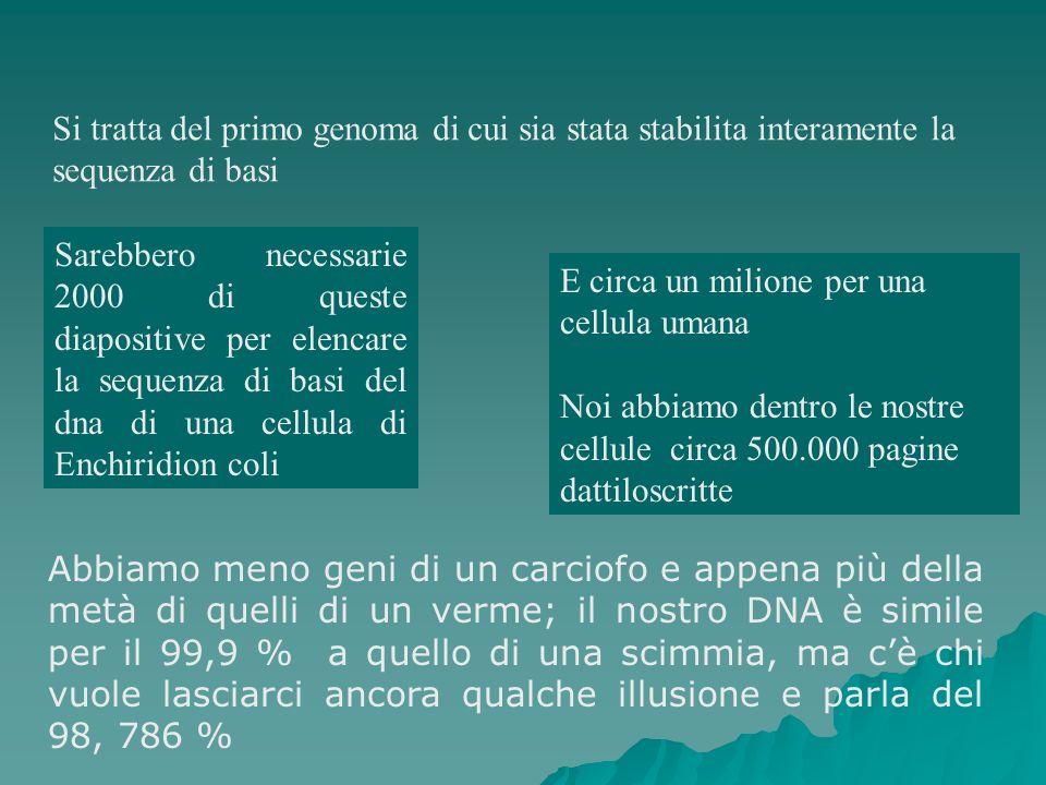Si tratta del primo genoma di cui sia stata stabilita interamente la sequenza di basi