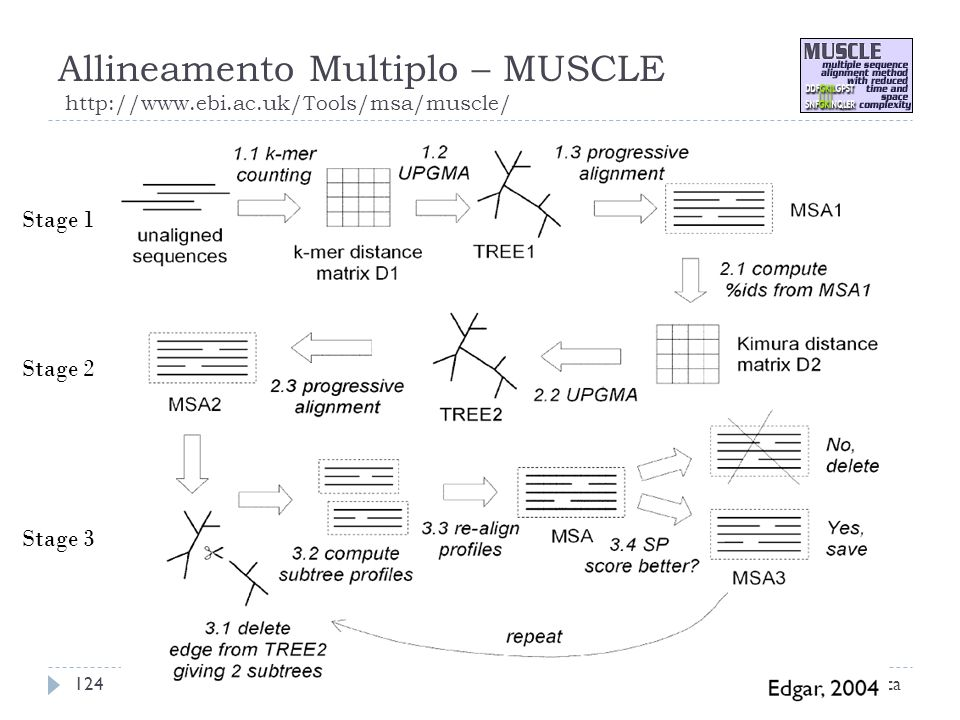 Allineamento Multiplo – MUSCLE http://www.ebi.ac.uk/Tools/msa/muscle/