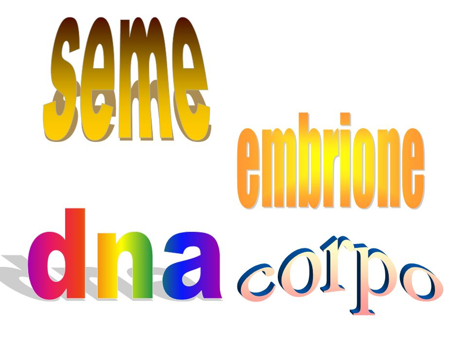 seme embrione dna corpo