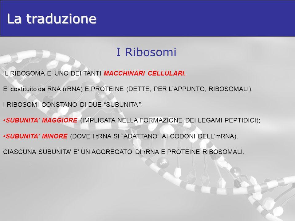La traduzione I Ribosomi
