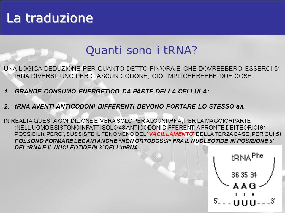La traduzione Quanti sono i tRNA