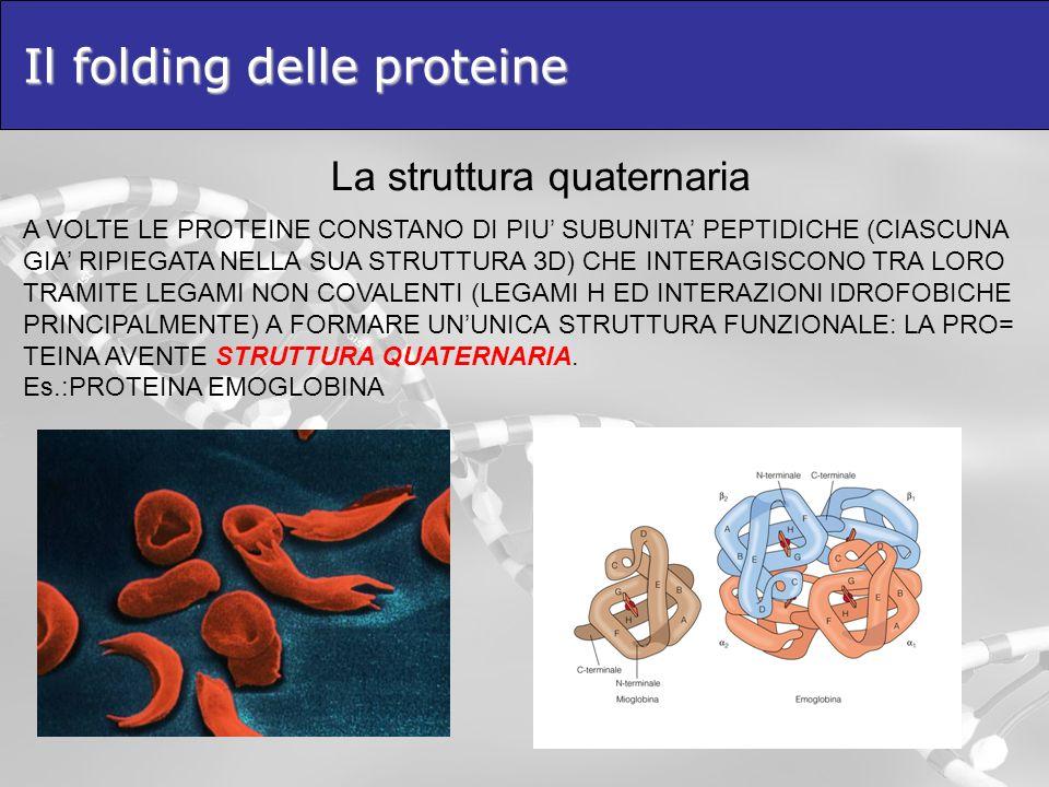 Il folding delle proteine