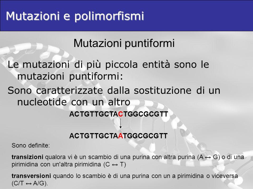 Mutazioni e polimorfismi