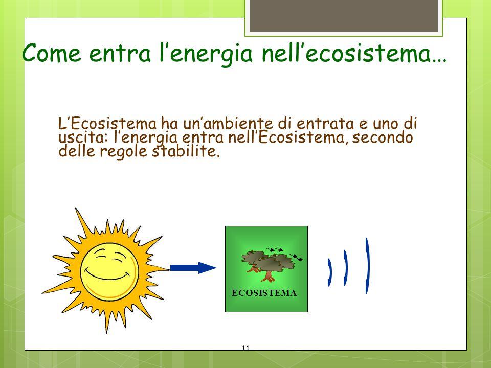Come entra l'energia nell'ecosistema…