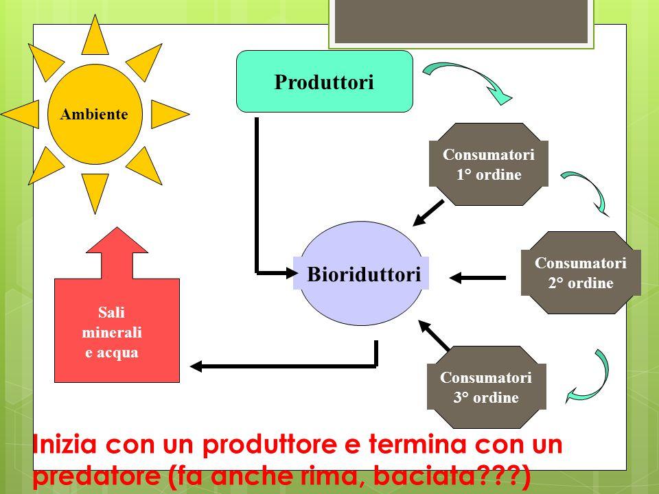 Ambiente Produttori. Consumatori 1° ordine. Consumatori 2° ordine. Consumatori 3° ordine. Bioriduttori.