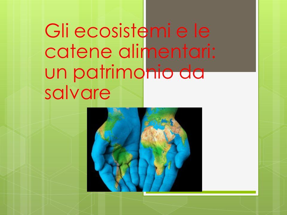 Gli ecosistemi e le catene alimentari: un patrimonio da salvare