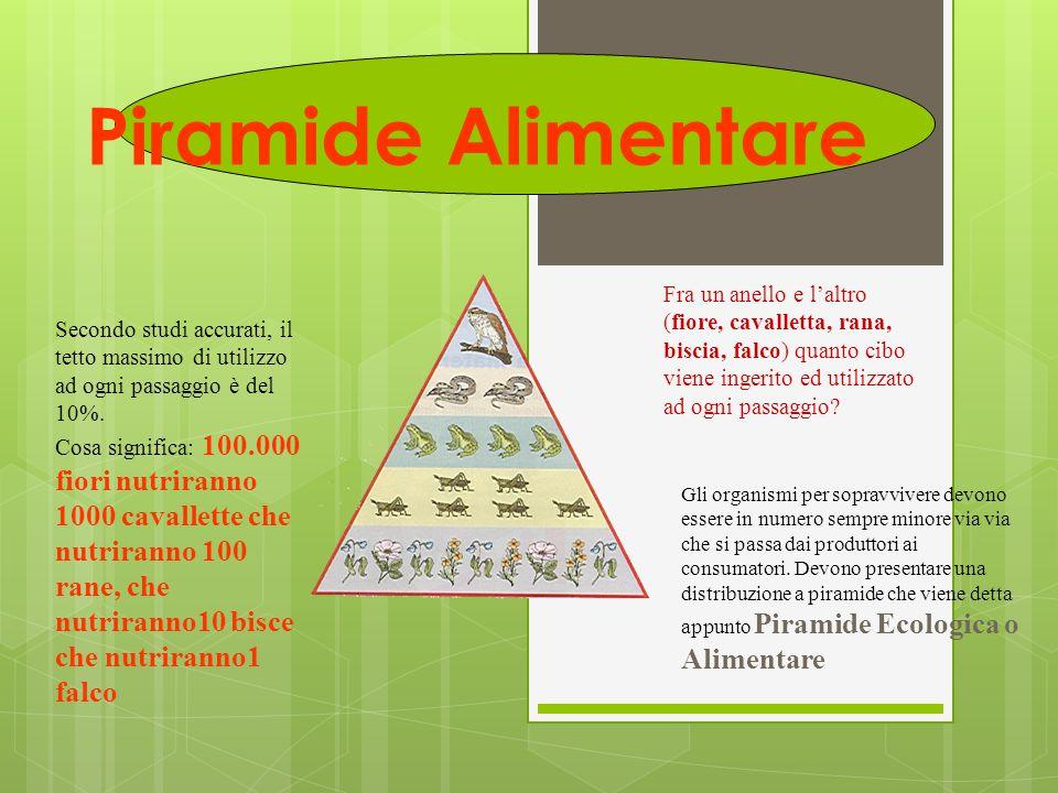 Piramide Alimentare Fra un anello e l'altro (fiore, cavalletta, rana, biscia, falco) quanto cibo viene ingerito ed utilizzato ad ogni passaggio