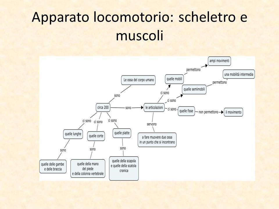 Apparato locomotorio: scheletro e muscoli