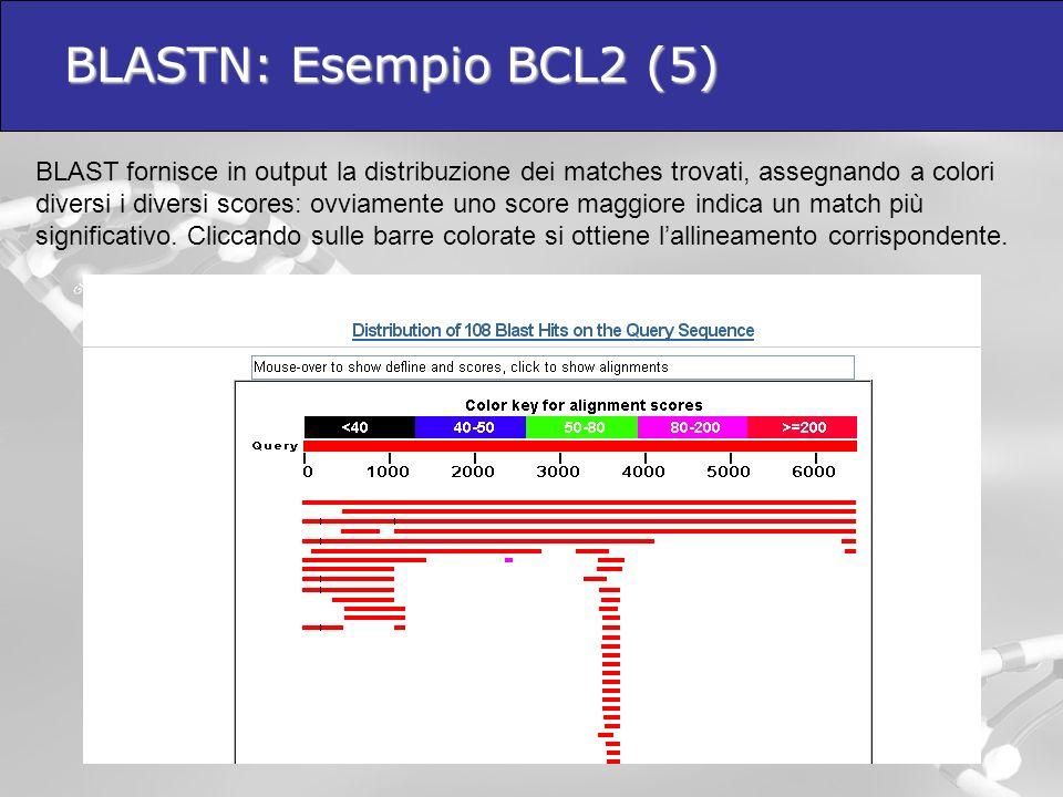 BLASTN: Esempio BCL2 (5)