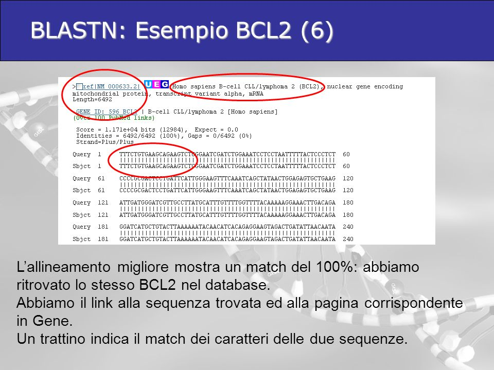 BLASTN: Esempio BCL2 (6) L'allineamento migliore mostra un match del 100%: abbiamo ritrovato lo stesso BCL2 nel database.