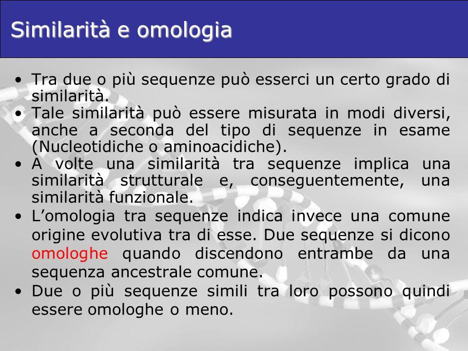 Similarità e omologia Tra due o più sequenze può esserci un certo grado di similarità.