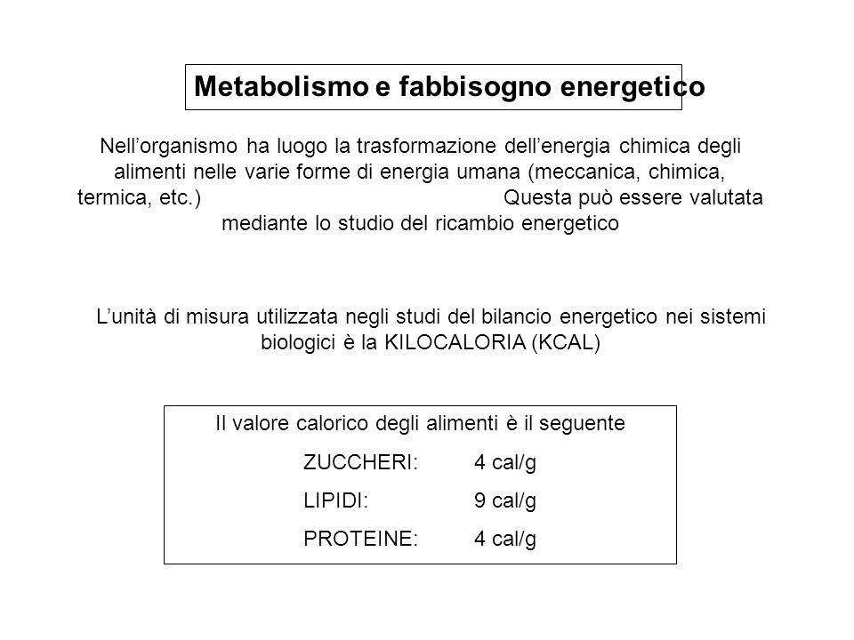 Il valore calorico degli alimenti è il seguente