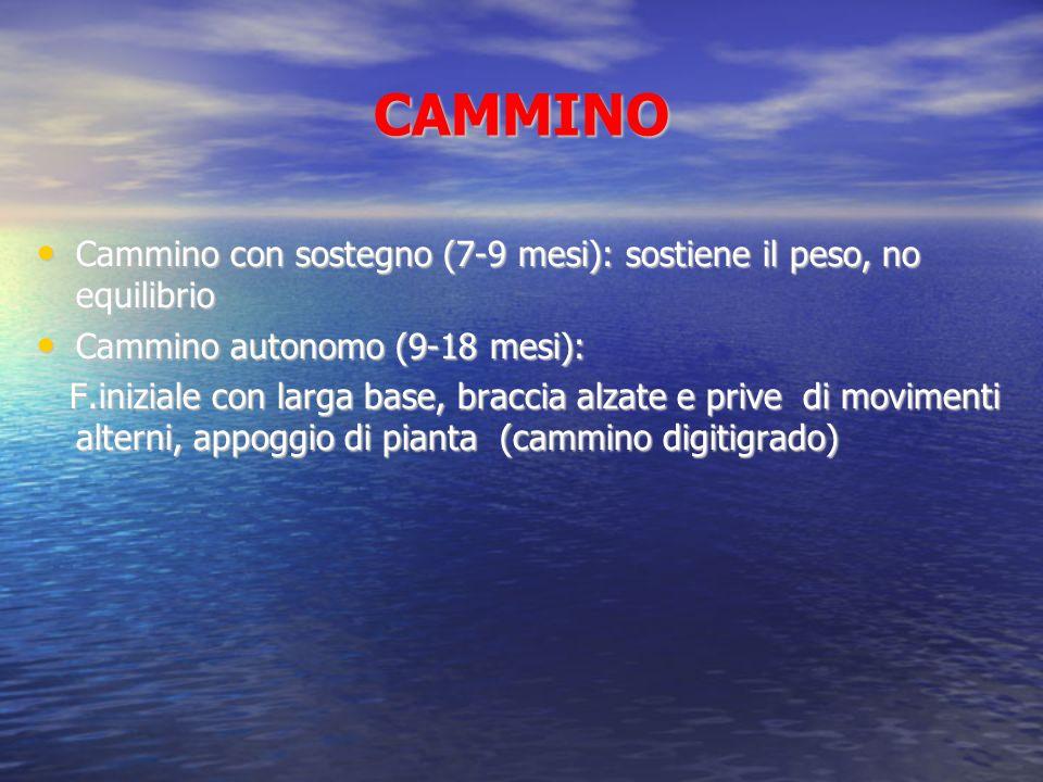CAMMINO Cammino con sostegno (7-9 mesi): sostiene il peso, no equilibrio. Cammino autonomo (9-18 mesi):