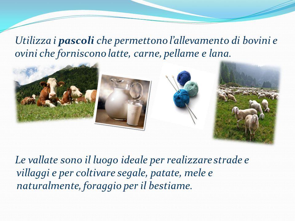 Utilizza i pascoli che permettono l'allevamento di bovini e ovini che forniscono latte, carne, pellame e lana.