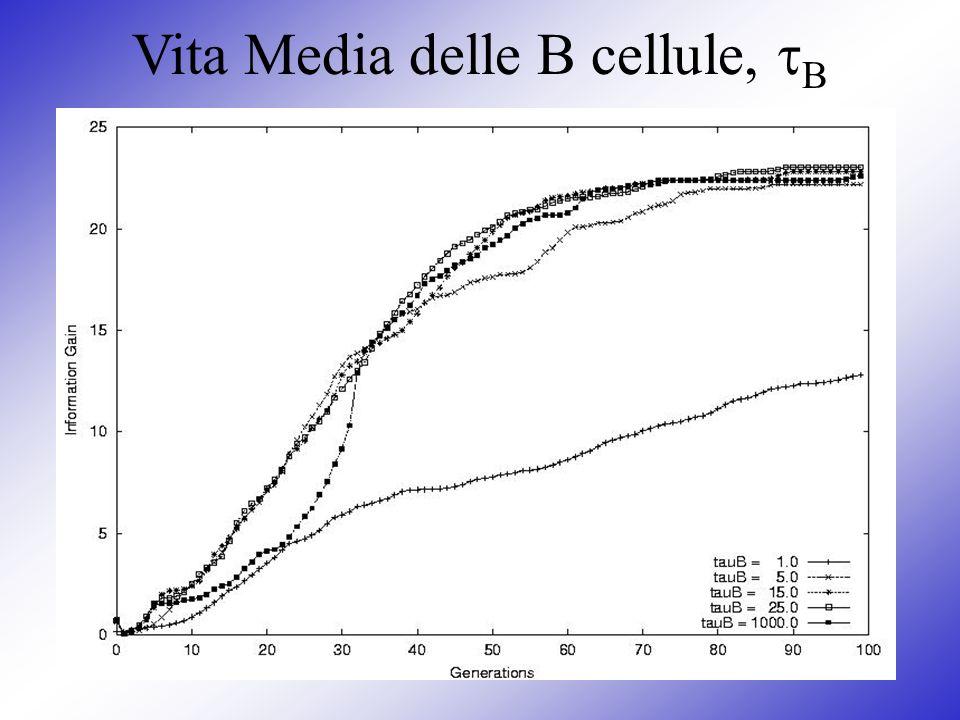 Vita Media delle B cellule, B