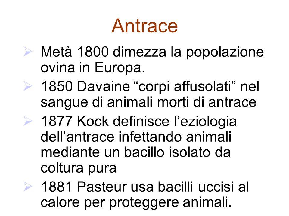 Antrace Metà 1800 dimezza la popolazione ovina in Europa.