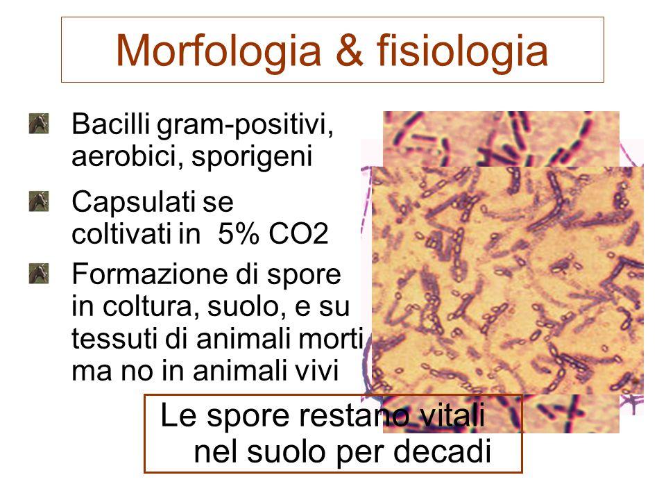 Morfologia & fisiologia