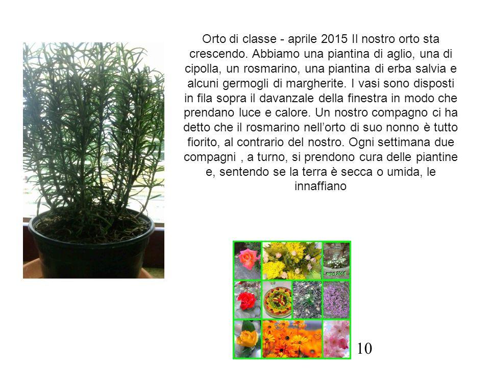 Orto di classe - aprile 2015 Il nostro orto sta crescendo