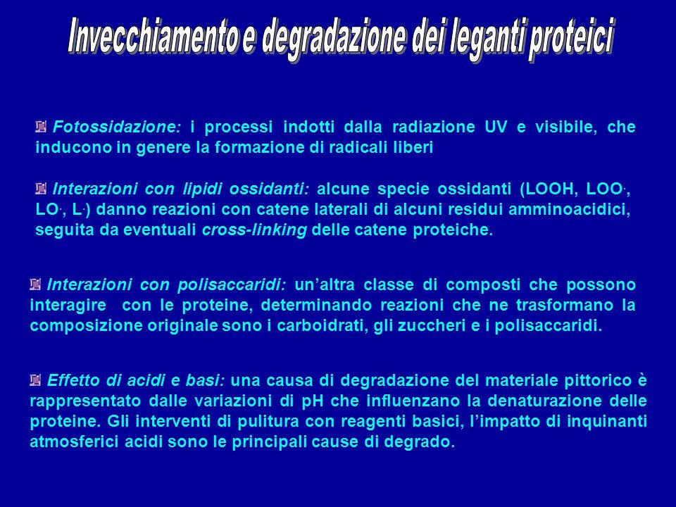 Invecchiamento e degradazione dei leganti proteici